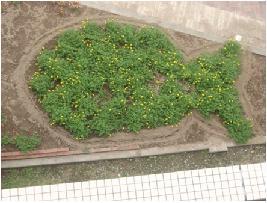 花壇のコイ