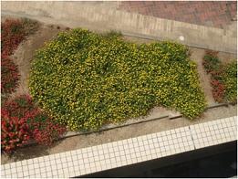 花壇の大きいコイ