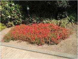 花壇の小さいコイ