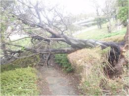 ラブリバー公園の木