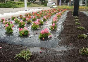 バス停横の花壇